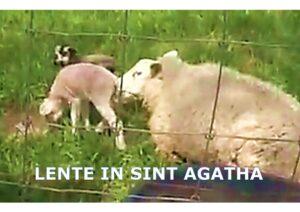 LENTE IN SINT AGATHA